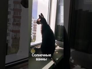 2773).  - Котик Люк Скай (Теперь Яша) нашел дом (видео из дома)
