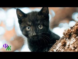 На развилке дерева сидел маленький котёнок и жалобно смотрел, поскольку кричать громко уже не мог…