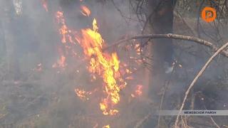 На границе Межевского и Кологривского районов десятый день продолжают тушить масштабный лесной пожар