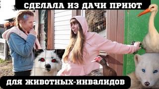 девушка из Москвы переехала в деревню и открыла приют для бездомных животных - инвалидов