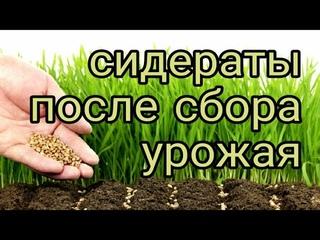 youtube_video_191096313-2021-07-26-03-50-32