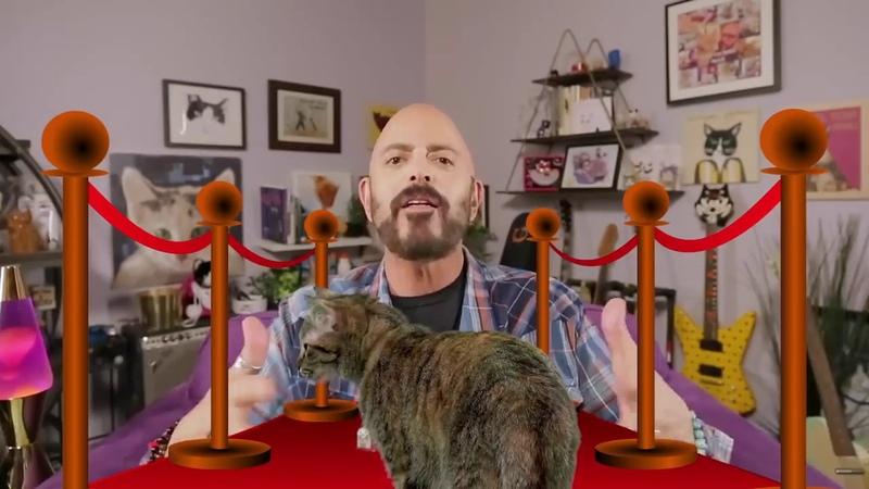 Джексон Гэлакси Базовый лагерь для вашей кошки