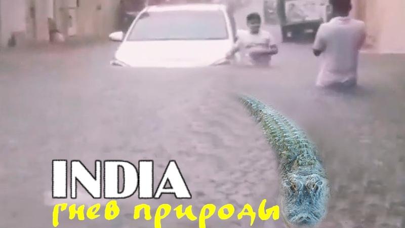 Крокодилы на улицах страшное наводнение в Индии штат Гуджарат