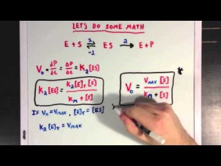 Steady States and the Michaelis Menten Equation