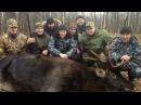 Большая охота на косулю, лося, кабана! Поиск трофеев