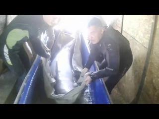 АФАЛИНЫ: Спаси дельфина, пока он живой! Закрой дельфинарий - Верни дельфину море!