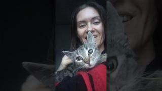 котенок Мурка ищет дом! ей 3.5 мес. приют. спб