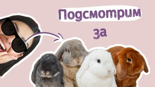 Смешные кролики | Funny animal videos | Декоративн...