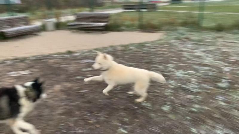 Видео от White Varg