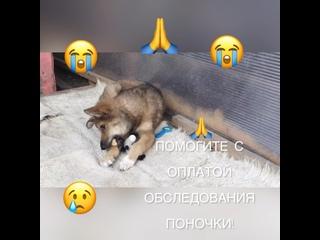 Добрый Дом в Тольятти kullanıcısından video