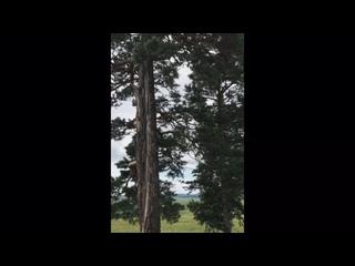 Видео от Алины Автомоновой