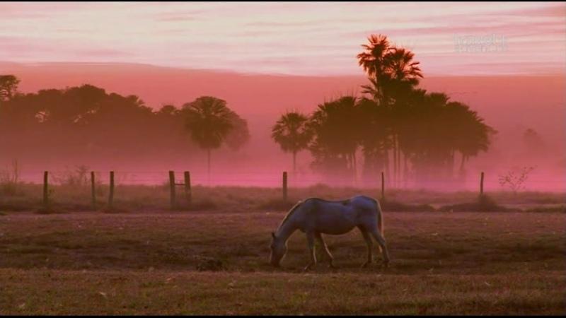 Путешествие на край света с Артом Вольфом 18 серия Бразилия Пантанал
