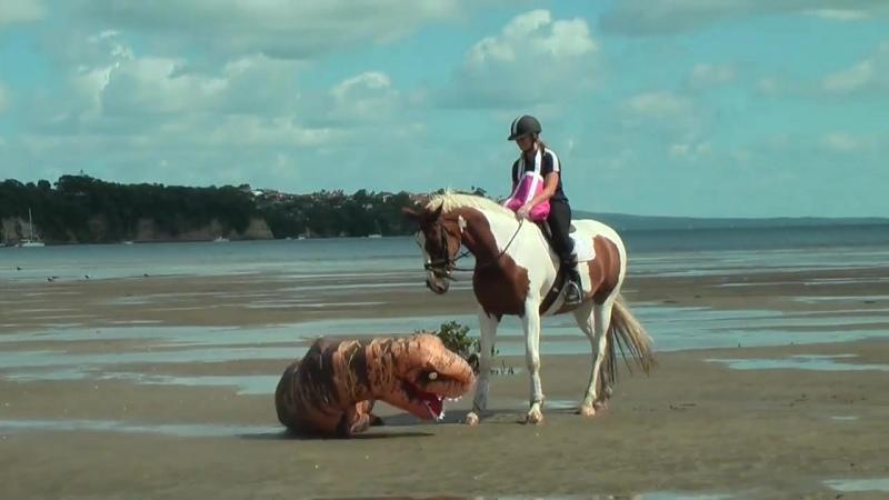 Самая невозмутимая лошадь