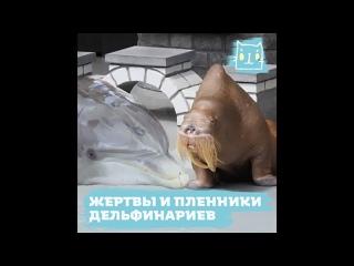 Дельфинарий, океанариум – тюрьмы для смертников