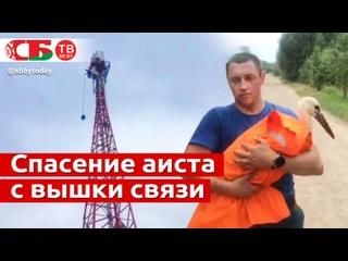 Аиста спасли с 40-метровой вышки связи