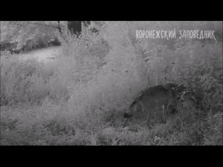 Video by Блокнот Воронеж(Новости Воронежа)