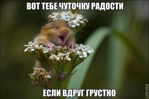 photo from album of Olga Sladkih №2