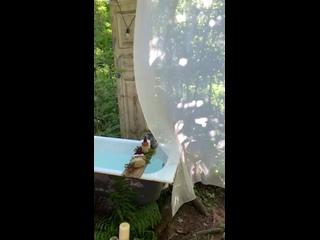 Видео от Домик в лесу