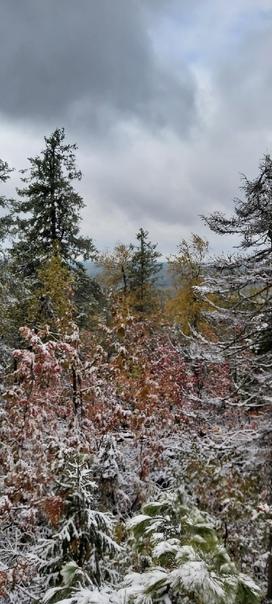 Первый снег в Каменном городе📷: [id240357727|Алекс...