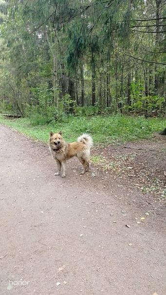 Бегает собака в Орловой Роще. Без поводка, с ошейн...