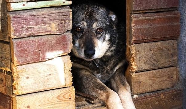 Директора одного из приютов для животных в Иванове...