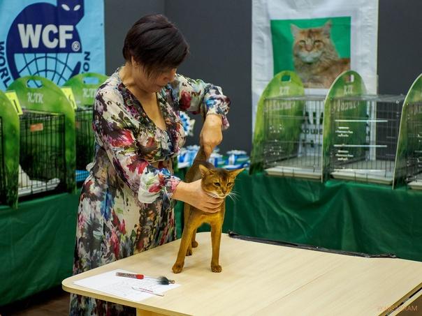 Абиссинская кошка из Благовещенска стала победител...