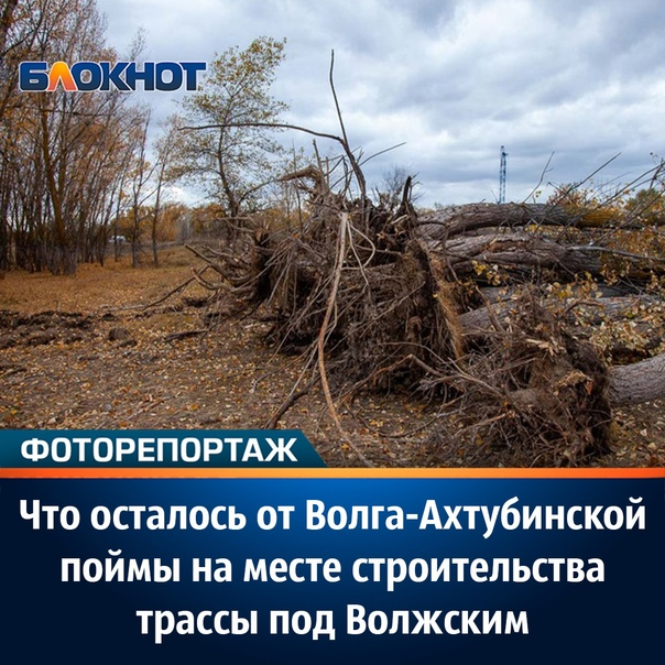 16 октября фотокорреспондент редакции «Блокнот Вол...