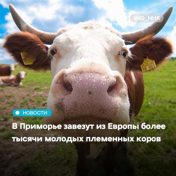 В Приморском крае насчитывается почти 30 тысяч дой...