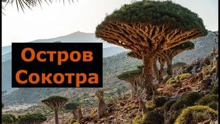 Остров Сокотра, честный обзор 2021